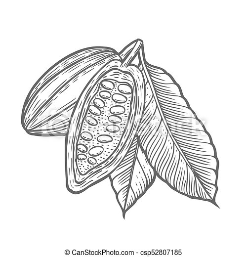 Cocoa beans illustration. - csp52807185