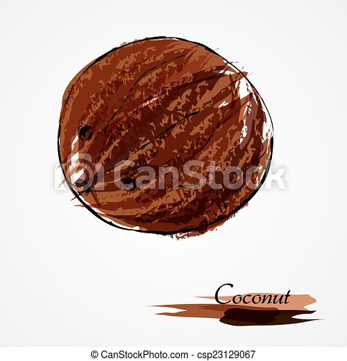 Coconut Hand Drawn Vector Ripe Whole Coconut On Light Background