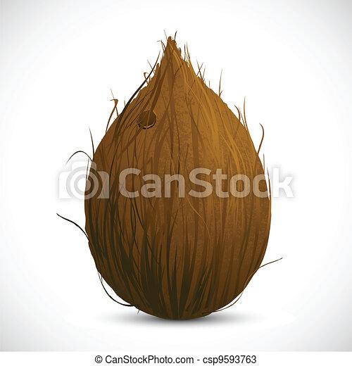 Coconut - csp9593763