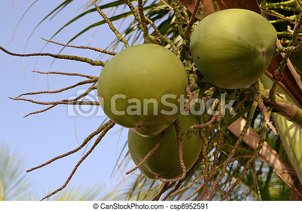 coconut-fruits-with-bluesky - csp8952591