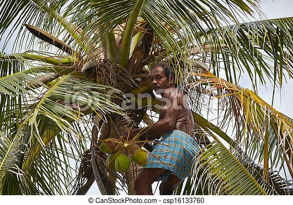 Coconut man - csp16133760