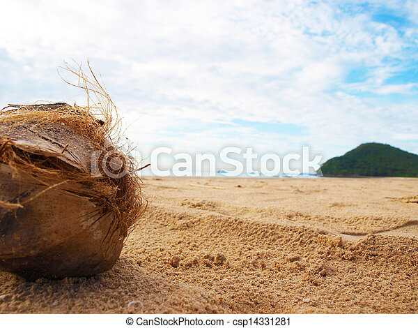 coconut on the beach - csp14331281