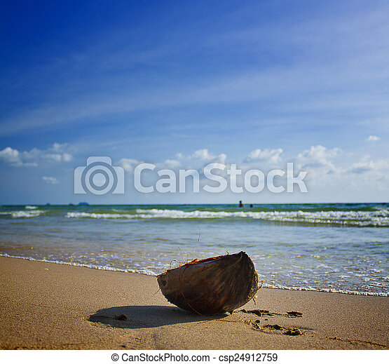 Coconut on the sea background - csp24912759