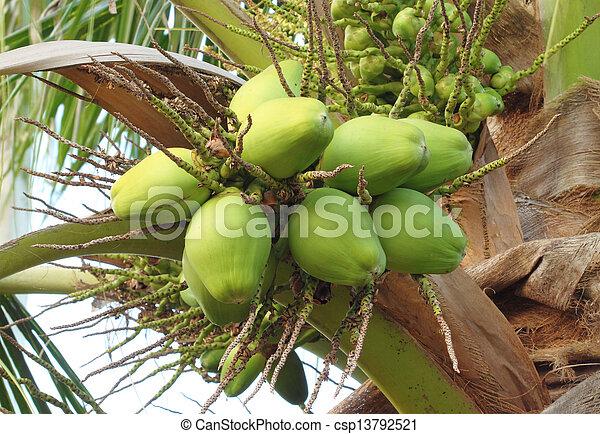 coconut on the tree - csp13792521