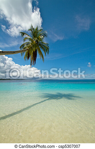 Coconut palm tree on perfect tropical beach - csp5307007