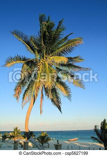 coconut palm trees Caribbean tropical beach - csp5627199