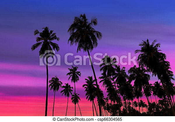 Coconut palm trees silhouette - csp66304565