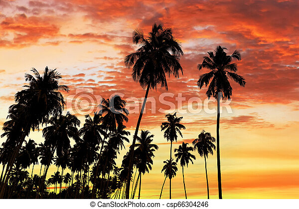 Coconut palm trees silhouette - csp66304246