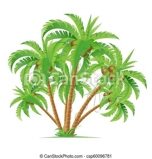 Coconut Palms - csp60096781