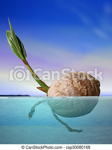 Coconut seed drifting at sea under blue sky - csp30080168