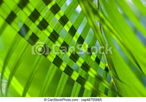 coconut tree palm leaves crossed for natural background or texture with backlit. Sunlight through leaves. Selective focus - csp46755665