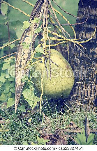 Coconut tree - csp23327451