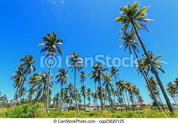 Coconut tree - csp23620125