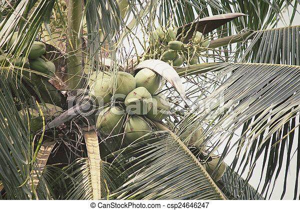 Coconut tree - csp24646247