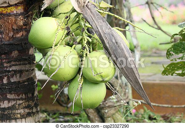 Coconut tree - csp23327290