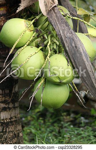 Coconut tree - csp23328295