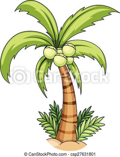 Coconut tree - csp27631801