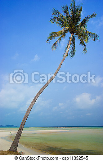 Coconut trees in the beautiful beac - csp11332545