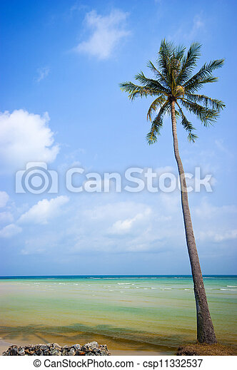 Coconut trees in the beautiful beac - csp11332537