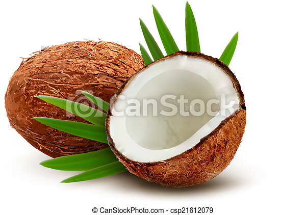 Coconut with leaves. Vector.  - csp21612079
