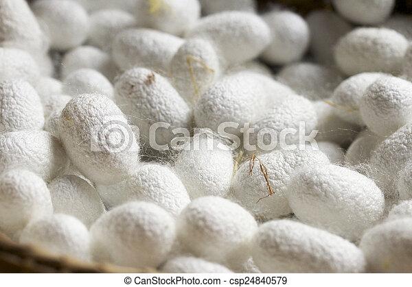 cocoon silkworm - csp24840579