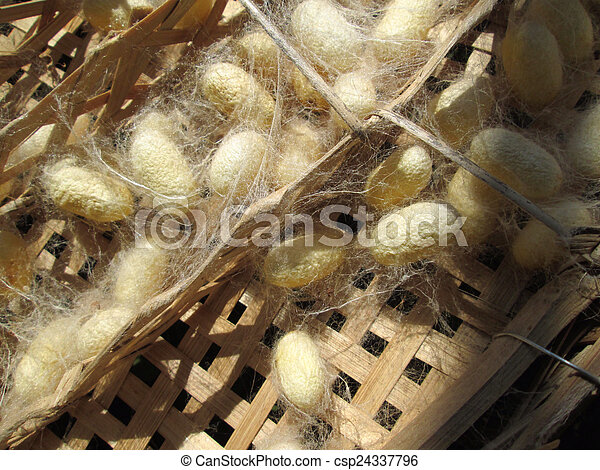 Cocoon silkworm - csp24337796