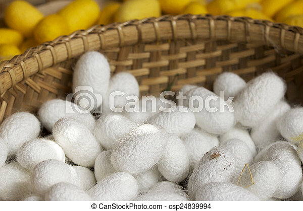 cocoon silkworm - csp24839994