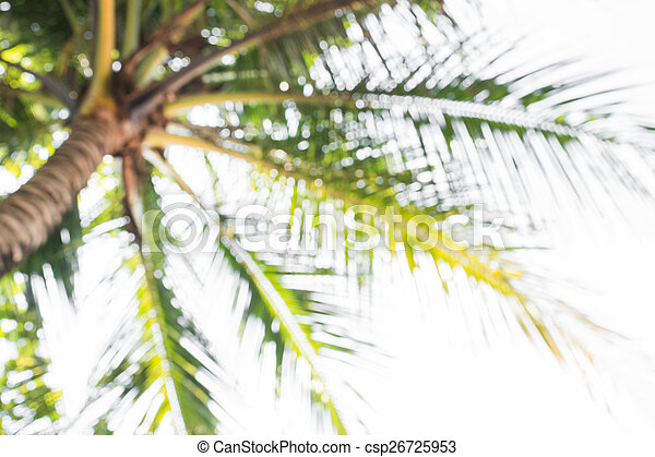 cocosnoot, abstract, bomen, vaag, focus., diepte, achtergrond - csp26725953
