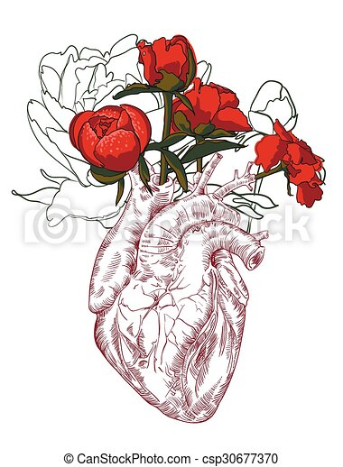 Coeur Fleurs Dessin Humain Arriere Plan