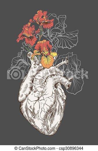 Coeur fleurs dessin humain arri re plan vecteur eps - Dessin coeur humain ...
