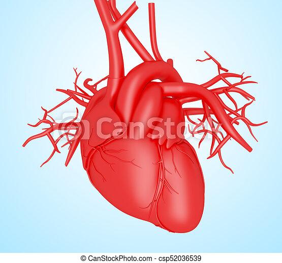 Coeur humain 3d corps coeur illustration humain 3d - Dessin du coeur humain ...