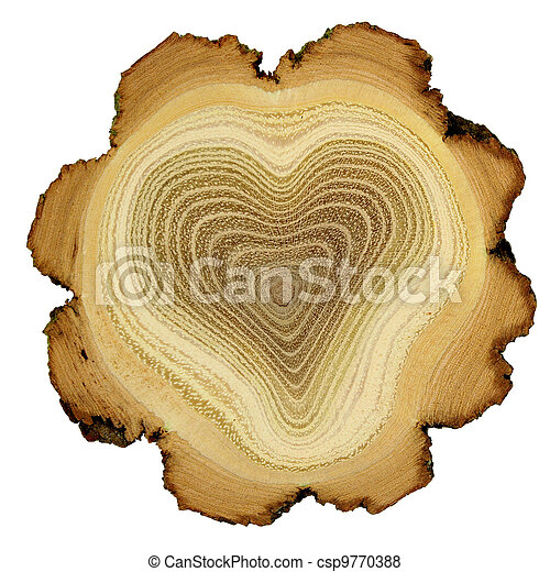 coeur, -, section, anneaux, croix, arbre, croissance, acacia - csp9770388