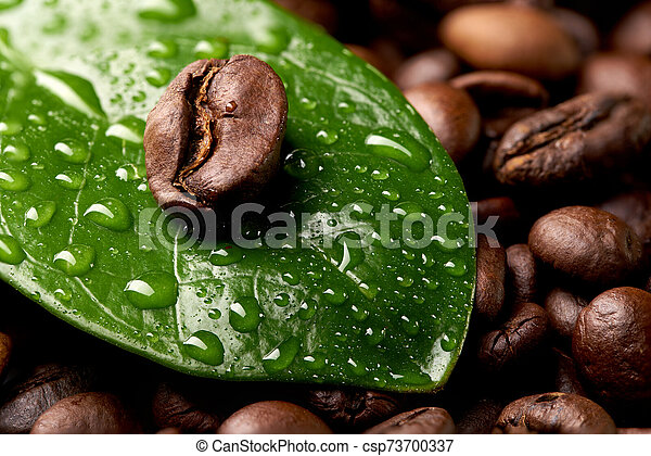 Coffee Bean On A Green Leaf With Drops Of Water Lying On The Background Of Coffee Beans