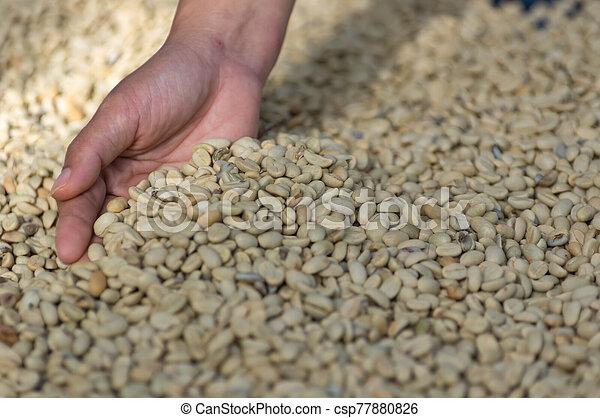 Coffee beans - csp77880826