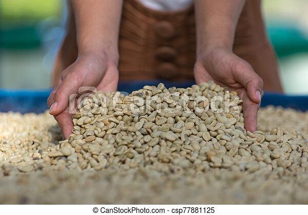Coffee beans - csp77881125