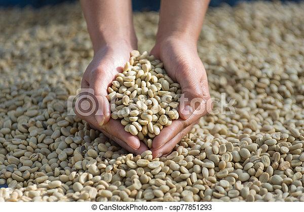 Coffee beans - csp77851293