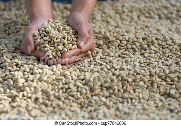 Coffee beans - csp77846006