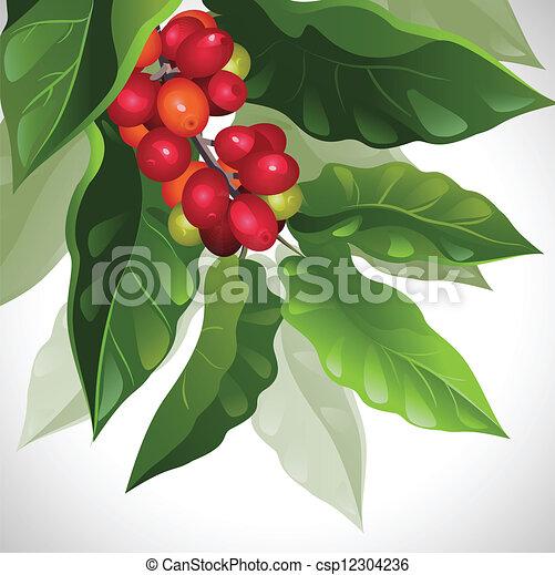 coffee  - csp12304236