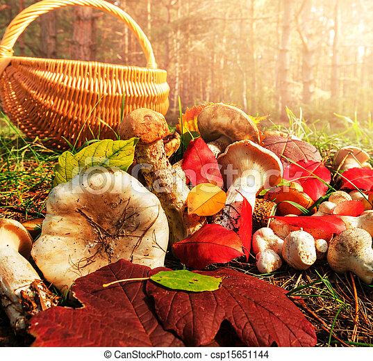 cogumelo - csp15651144