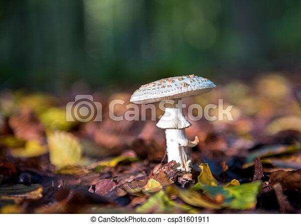 cogumelo - csp31601911