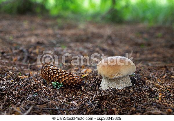 cogumelos, comestível, edulis, boletus - csp38043829