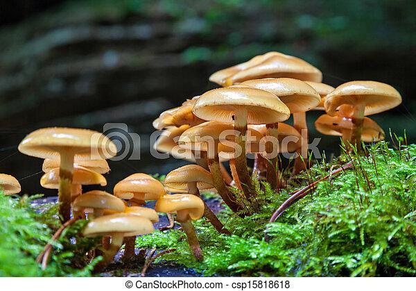 cogumelos - csp15818618