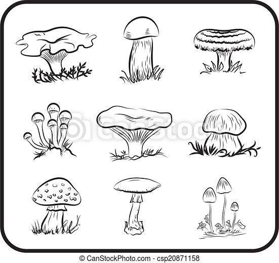 cogumelos - csp20871158