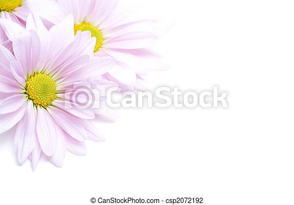 coin, fleurs - csp2072192