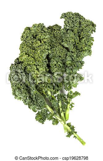 Kale aislado - csp19628798