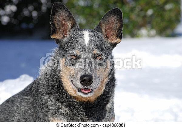 Cold Dog - csp4866881