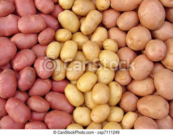 colhido, batata, tubers - csp7111249