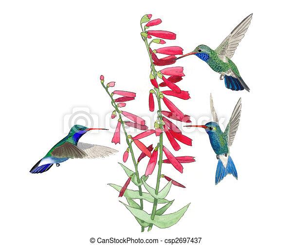 colibrí ancho - facturar - csp2697437
