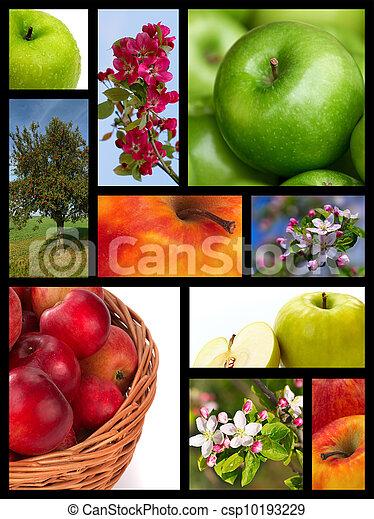 collage, äpple - csp10193229