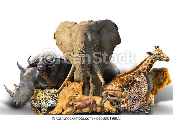 Collage de animales africanos - csp62819903
